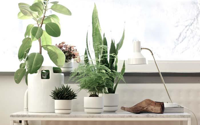 Arredare con le piante da interno: una scelta eco-friendly  PreventivoFacile.it